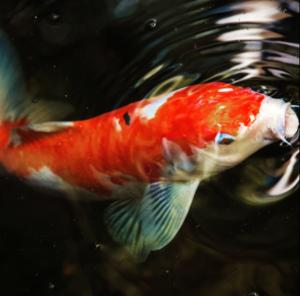 fish-supplies-express-pets-supplies